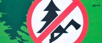 вырубка леса запрещена