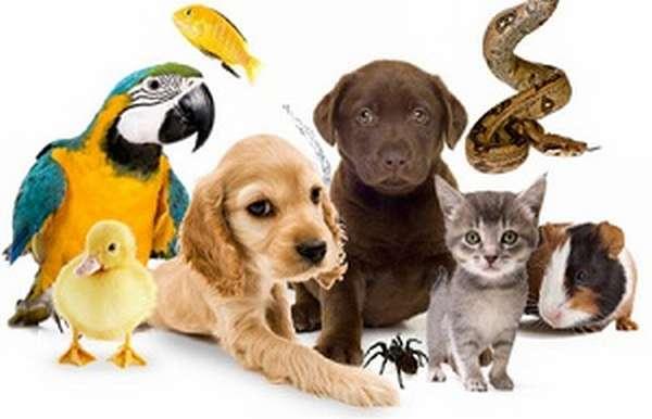 каких животных можно держать?