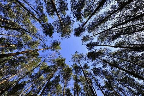 Аукцмон по аренде леса