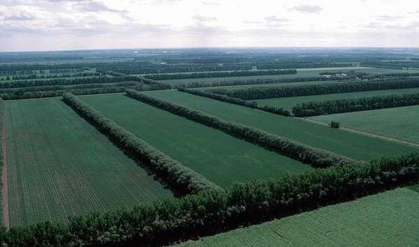 Целевое использование земель