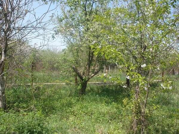 незаконная вырубка деревьев (главный ключ)