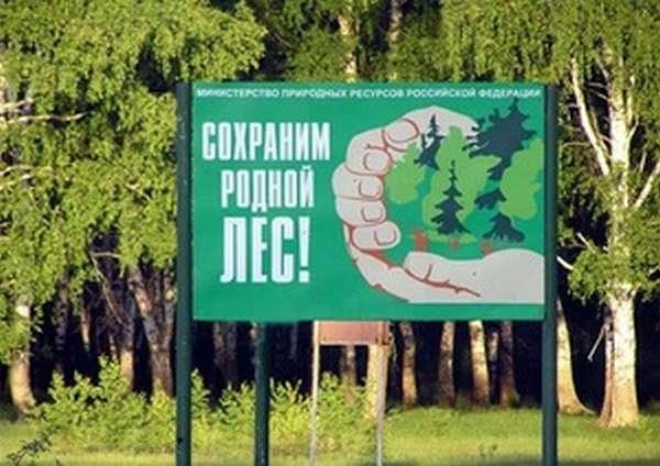 Лесные угодья и дикие леса - что допускается по закону в каждом случае