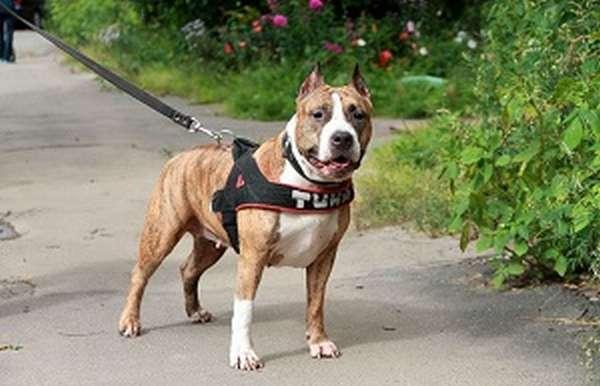 животное собака