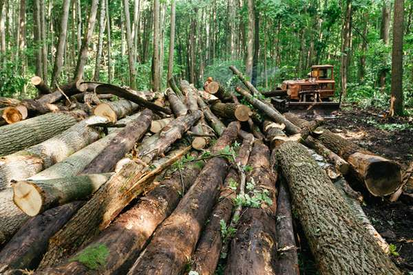 Оформление договора на аренду леса